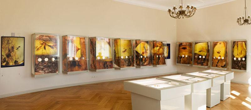 amber-museum